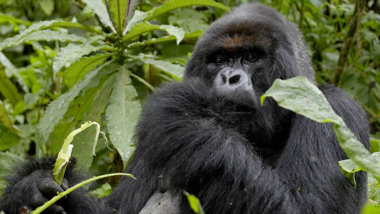 Preparation Uganda Gorillas 2018
