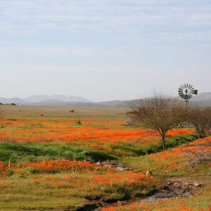 Namaqualand, West coast, Cederberg break 2 Sept 2020
