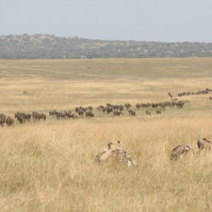 Serengeti, Gorillas & Chimps, East Africa, May 2022, Electronic payment options